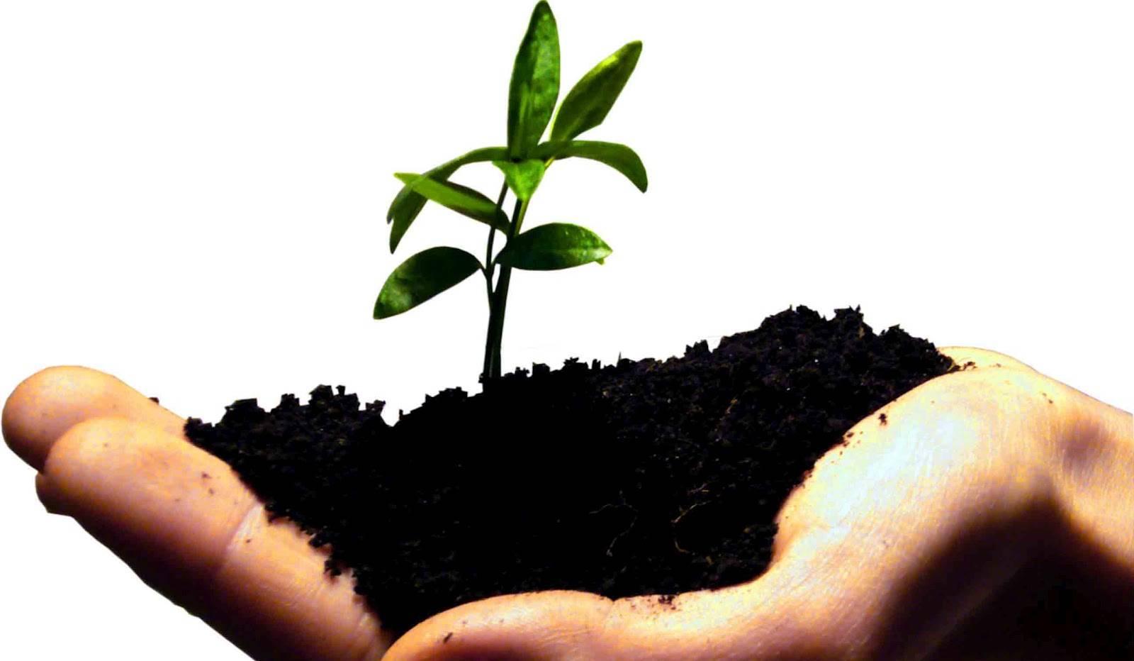 Finanziamenti a Start Up Agricole