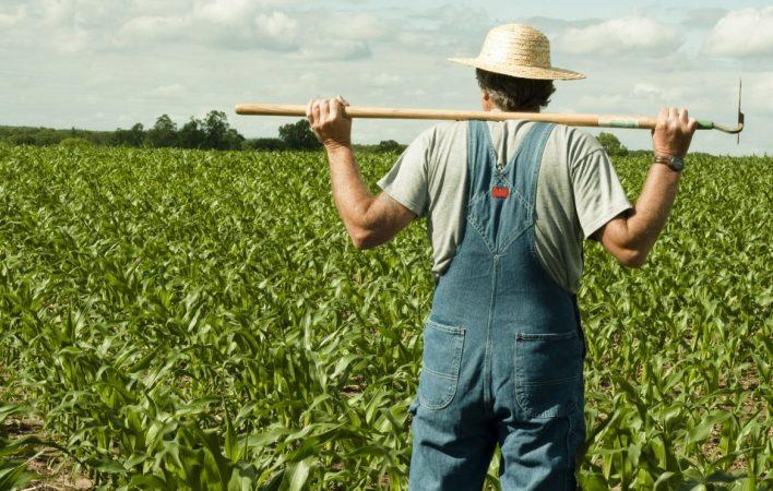 Disoccupazione agricola 2018 quando arriva